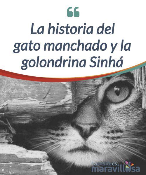 La historia del gato manchado y la golondrina Sinhá   La #fábula del gato manchado y la golondrina #Sinhá es una bella metáfora de los laberintos del corazón, en un amor imposible e #incomprendido.  #Libros