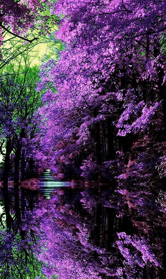 ✯ Japanese Garden. Oh the purple beautifulness!!