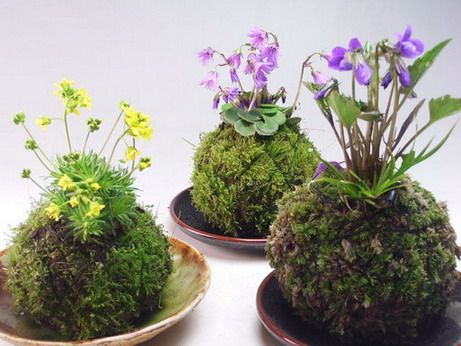 Kokedama bonsai is a ball of moss-covered soil with arranged plants. You will usually see these hanging beautifully.