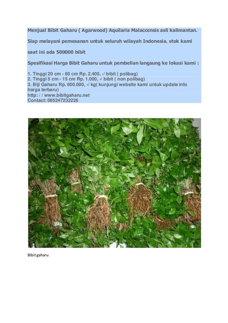 Bibitgaharu.net by bibitgaharukalimantan via slideshare