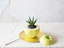 sliced green apple pot (realistic paint)十二のまき