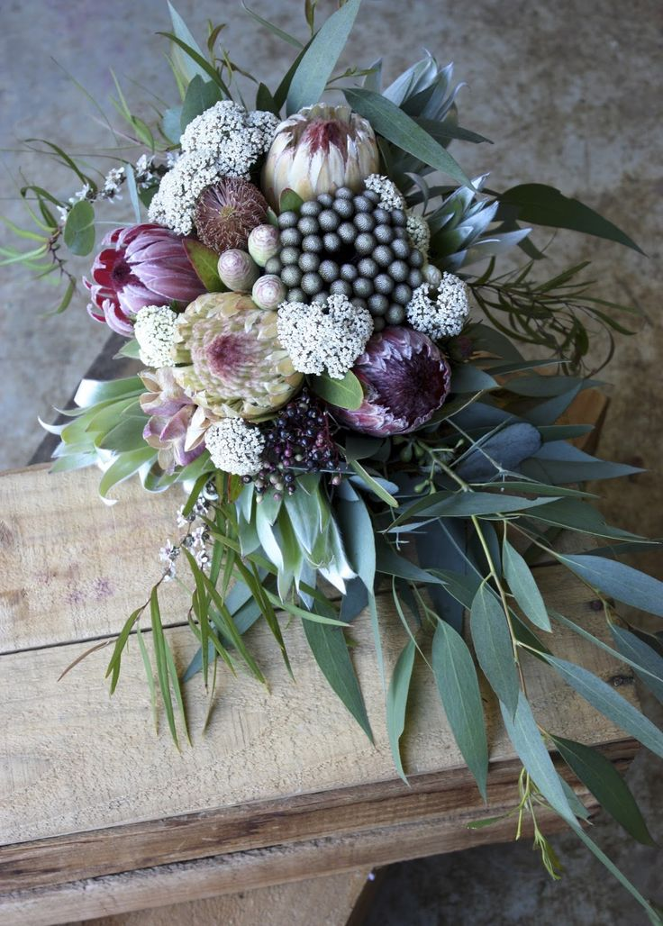 proteas and native flowers grown fresh in beautiful south-eastern tasmania