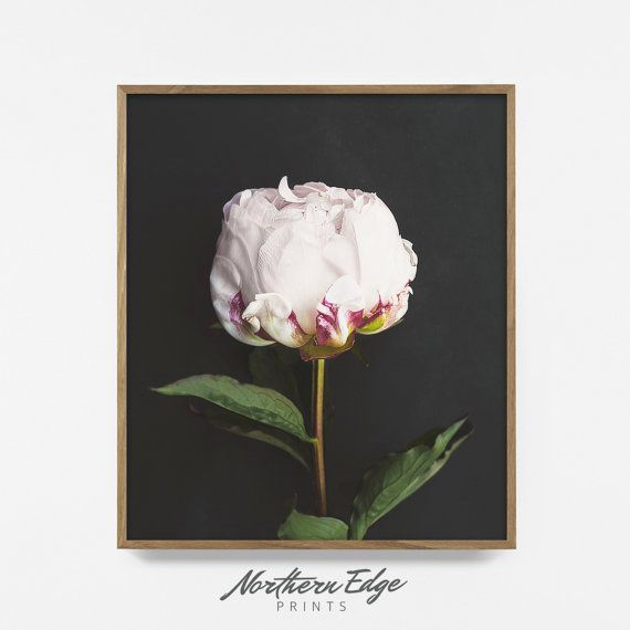 Photo pivoine Art imprimable Photo de fleur par NorthernEdgePrints