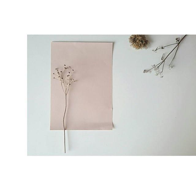 // Nog nooit in mijn leven ben ik zoveel met bloemen bezig geweest als afgelopen jaar. Ik dacht dat ik, met het aanbreken van de winter, noodgedwongen een pauze zou moeten nemen. Maar nog steeds heeft de natuur veel in de aanbieding. #nature #flower #minimal #white #styling #stylist #create #creativelife #grateful #lovelife #slowliving #littlethings #photography