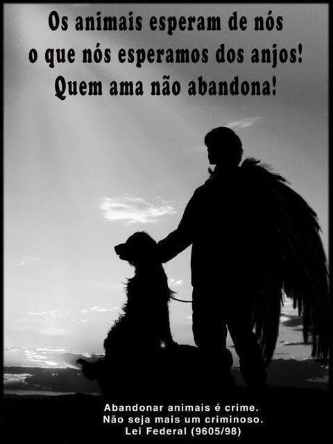 """Fica Cãomigo: Anjos / """"A proteção dos animais faz parte da moral e da cultura dos povos """" (Vitor Hugo) """"Os animais esperam de nós o que nós esperamos dos anjos!"""" (Diele Rodrigues)"""