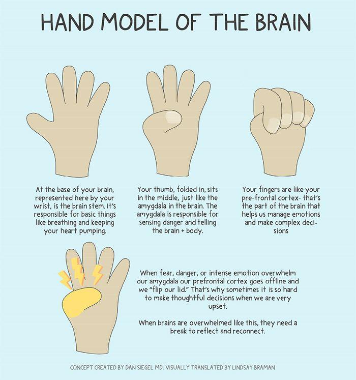 Hand Model of the Brain - A Doodle Illustrated Poster - LindsayBraman.com |  Social emotional learning, Psychoeducation, Emotional regulation