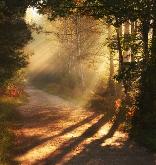Autumn Walk So peaceful!