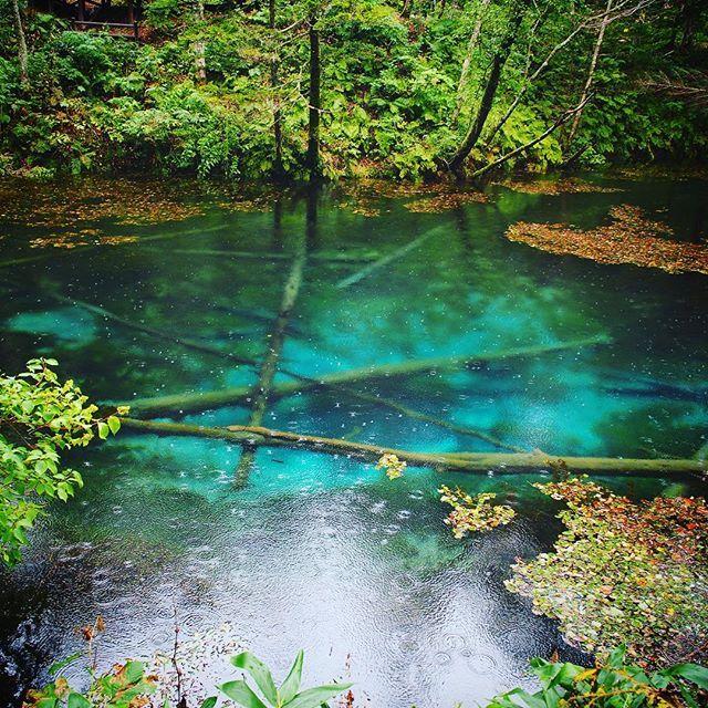 【ta__________ma】さんのInstagramをピンしています。 《リベンジしてきた🌳 雨降ってきて寒かった😭 #神の子池#清里#forest#森#blue#自然#nature#4連休#2日目#あいにくの雨#天気悪い#最悪》