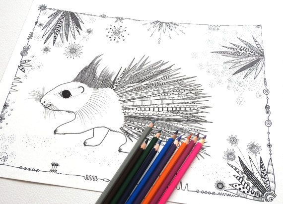 Porcupine Coloring Page Colouring Pages Adult Colouring