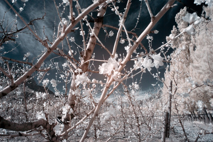 Seasons are changing, Tulbagh - infared photography by kate davies#Repin By:Pinterest++ for iPad#