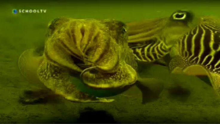 Leven in de zee - Thema: Dieren. Mylène Gordinou en Jurre Bosman nemen de kijkers mee in een onderzeeër. Welke dieren leven er diep in de zee? Niet alleen vissen, maar ook zeemonsters, geleedpotigen en weekdieren. Presentatie: Mylène Gordinou, Jurre Bosman