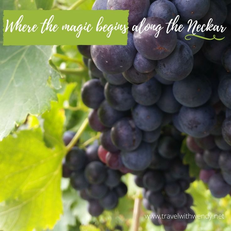 gothic coats  TravelwithWendy  quot Where the magic begins along the Neckar quot grape picking with the wine coop in Esslingen Germany For more info visit www travelwithwendy net tvlwendy