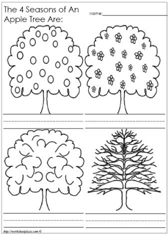 "An Apple Tree in 4 Seasons to go along with book ""The Seasons of Arnold's Apple Tree"""