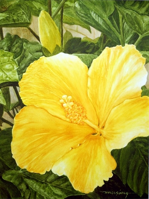 17 Best Images About Hibiscus On Pinterest Watercolor