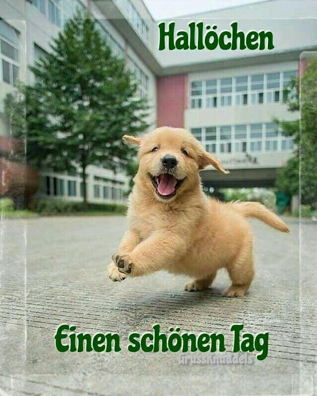Pin Von Silke Hesper Auf Guten Morgen Bilder Susse Hunde Und Katzen Golden Retriever Niedliche Hunde