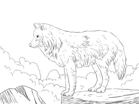 Vargar - Polarvarg