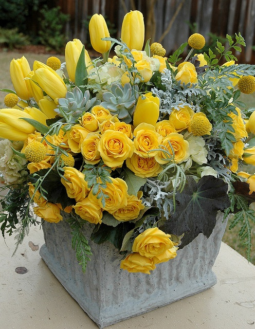 Sunny yellow ..roses, succulents, begonia foliage, tulips, yarrow balls, dusty miller and fern