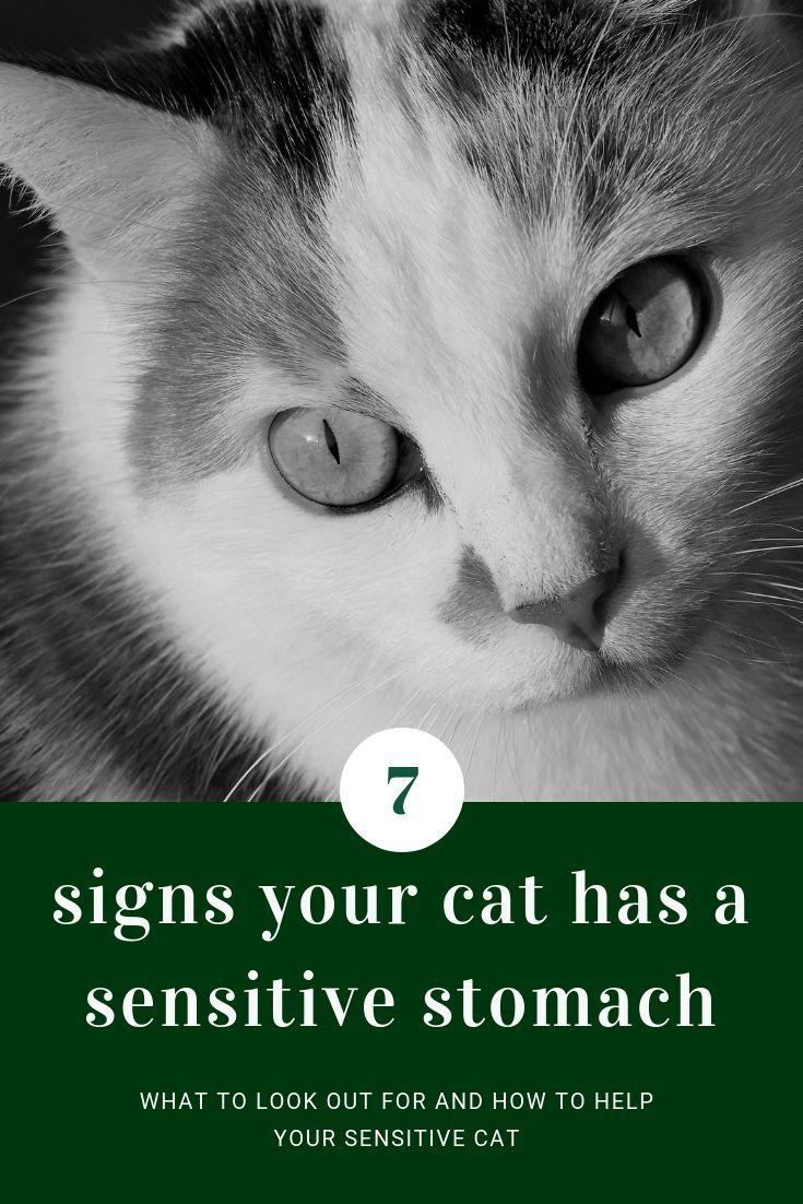 7 Signs Your Pet Has A Sensitive Stomach Sensitive Stomach Cat Food Sensitive Stomach Cat Food