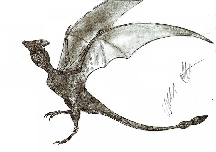 Ascialophoraptor by Teratophoneus.deviantart.com on @DeviantArt