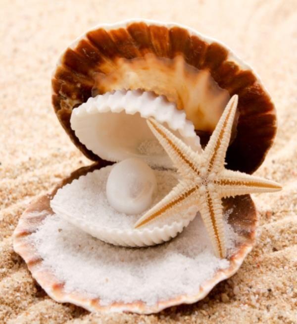 164 best Sea shells Sand in