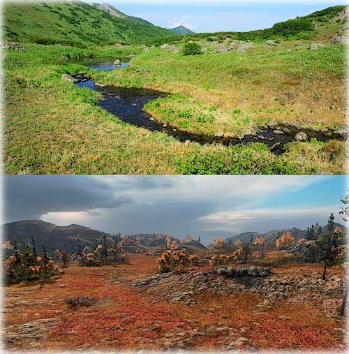 Растительный мир - особенности тундры