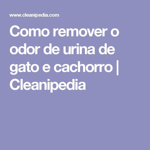 Como remover o odor de urina de gato e cachorro | Cleanipedia