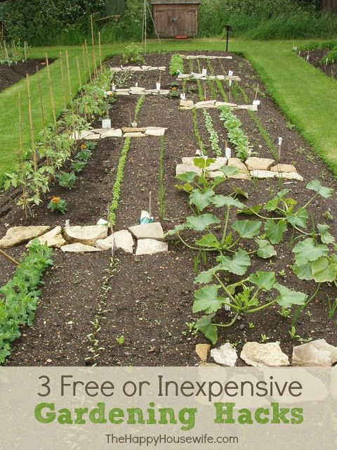 3 Free or Inexpensive Gardening Hacks | The Happy Housewife