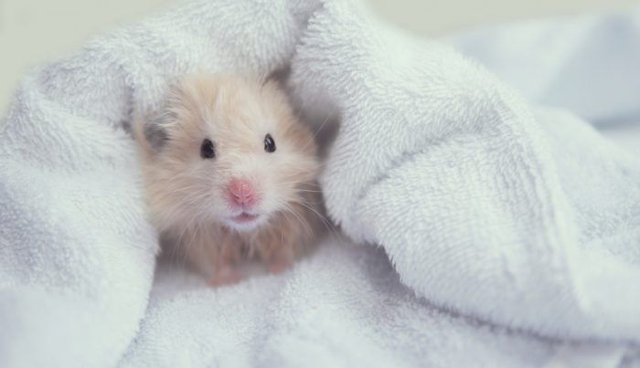 Hamsters Names Hamsters Names Cute Animals Hamsters Cage