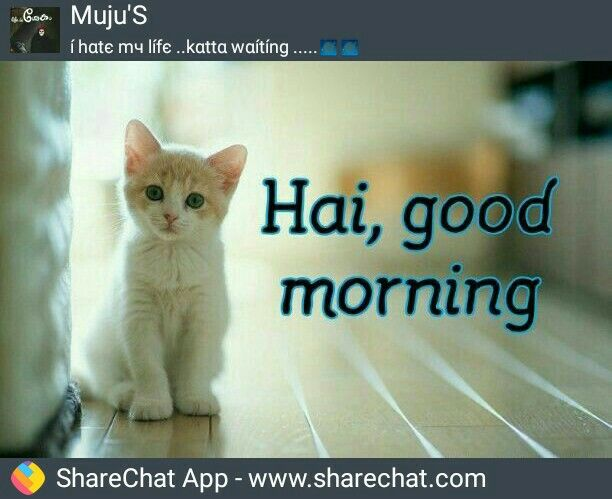 Pin By Sunarj Sunarj On Goodmorning Good Morning Animals Cats