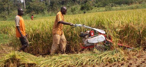 Agriculture en Côte d'Ivoire, le projet de l'Indénié-Djuablin - Banque africaine de développement