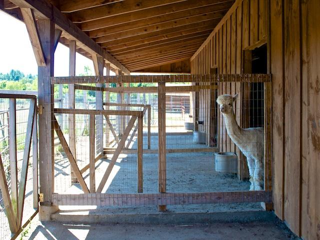 Barn designed for Alpacas
