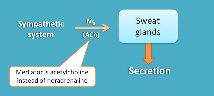 Only sympathetic innervation at sweat glands