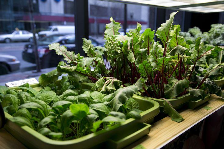 25 Trending Indoor Vegetable Gardening Ideas On Pinterest Growing Vegetables Vegetable