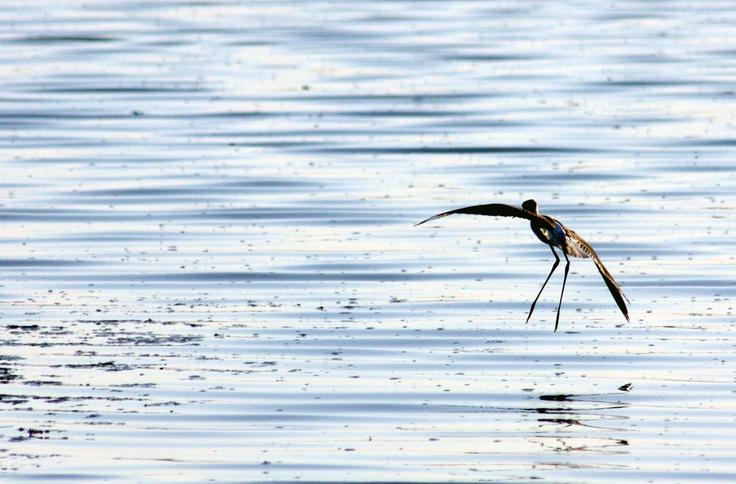Shot in lake Strogili, near Elafonisos.