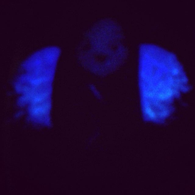 my little cutie angel Lauren Kate in the dark *-* #laurenkate #laurenkateangel #laurenkatebooks #thankslaurenkate #angel #ourangel #writer #wings #falleninspired #fallenatics #fallen #torment #passion #falleninlove #rapture #unforgiven #angelsinthedark #teardrop #waterfall #love #loveread #lovebooks #lovelauren #fanart #instalike #instafollow #cutesirascreations #sirascreations