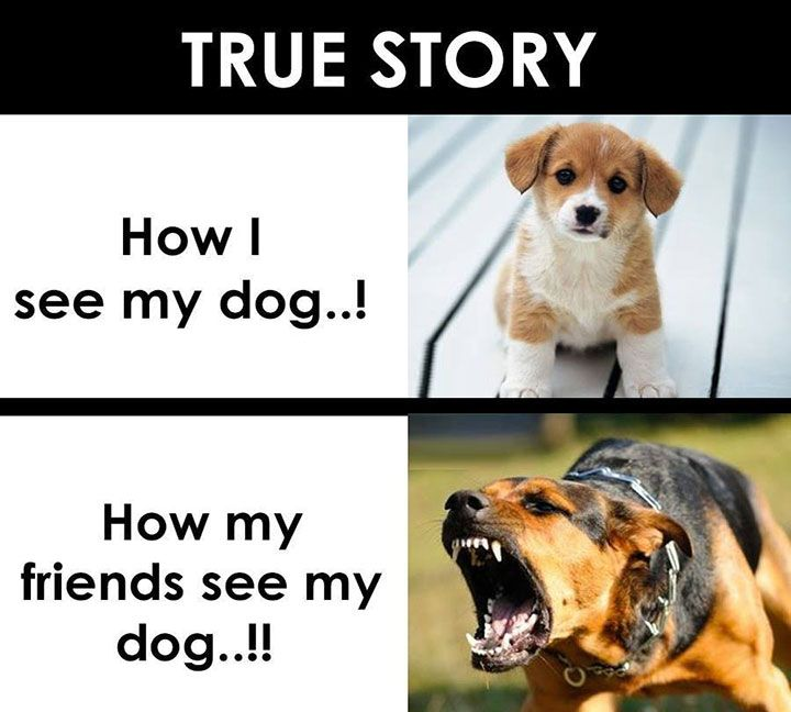 Best Funny Animal Pictures Images On Pinterest Funny Animal - This dog has some serious self control that will make you laugh