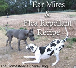Ear Mite Solution: 5 drops tea tree oil to 1 cup water. Gently drip about ten drops of this blended mixture into dog's ear and lightly massage base of ear. Dip cotton ball in the solution and clean inside of ear.