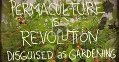 26 minutes | This timely documentary offers practical steps on how to 'permaculturize' our lives. It invites viewers into a permaculture community that spans the globe. Most importantly, it gives the critical inspiration needed to turn our backs on that which is failing us, and to create a sustainable future of our own making.