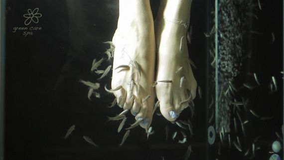Fish Spa offered at Green Care Spa - Ultimate relaxation www.greencarespa.gr