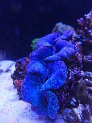 lagoon reef - Aquarium Vorstellung Meerwasser - onescape.club - Dein Meerwasser Forum, für Riffaquaristik, Aquascaping und Süßwasser Aquaristik