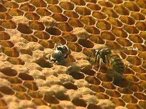Informatief filmpje voor kleuters over bijen en honing