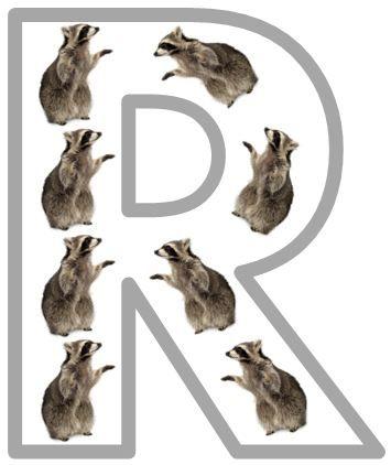 Rr is for Raccoon PrintablesPrek Abc, Rr Raccoons, Animal Alphabet, Preschool Theme, Letters Rr, Raccoons Printables, Raccoons Rules, 1 1 1 1 Animal Abc, Free Printables