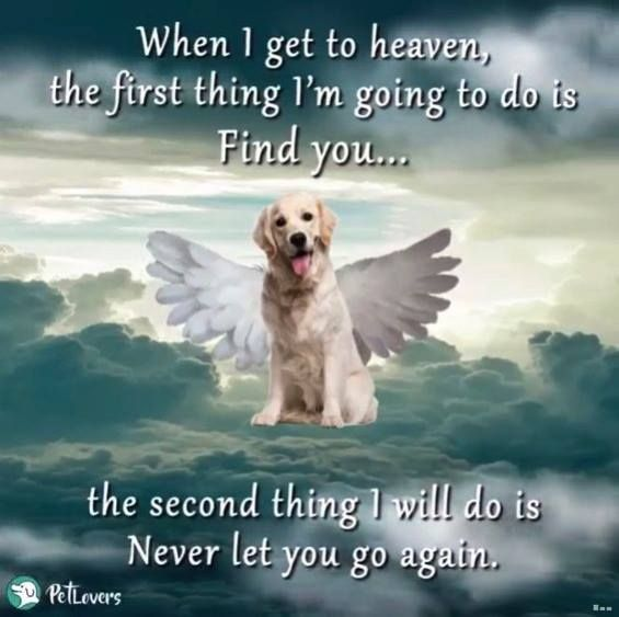 My Sweet Darling Girl I Ll Find You As Soon As I M Done Here I Love And Miss You So Very Very Much Dog Quotes Miss My Dog Pet Remembrance