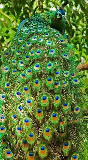 149 best images about BEAUTIFUL BIRDS on Pinterest ...