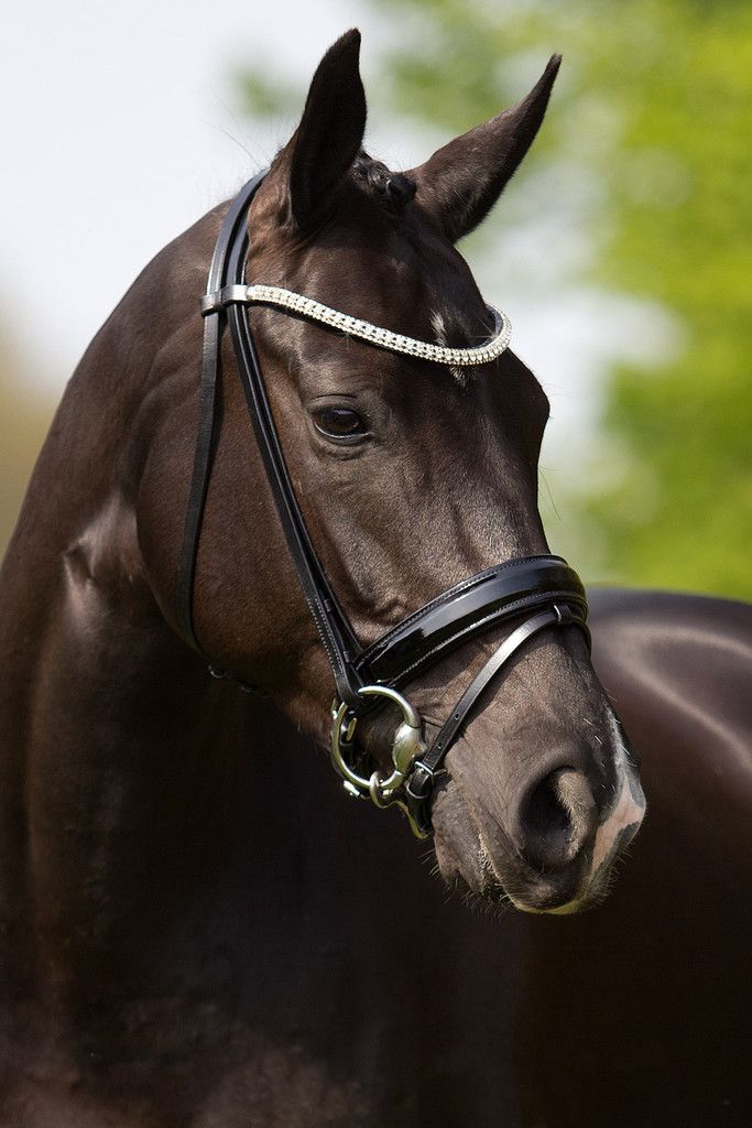 Premiera Athena Dressage Bridle - Black/Black – 20x60
