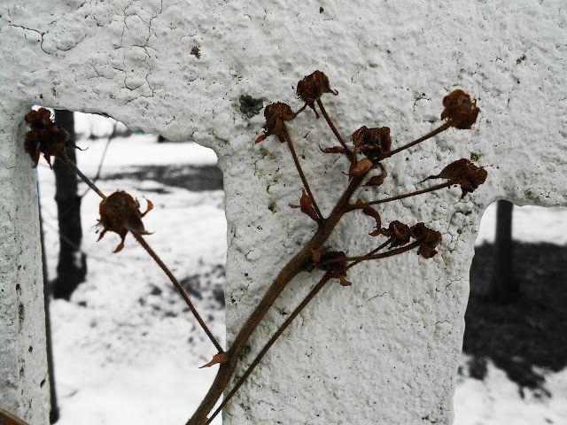 Fotomania : List do Wiosny