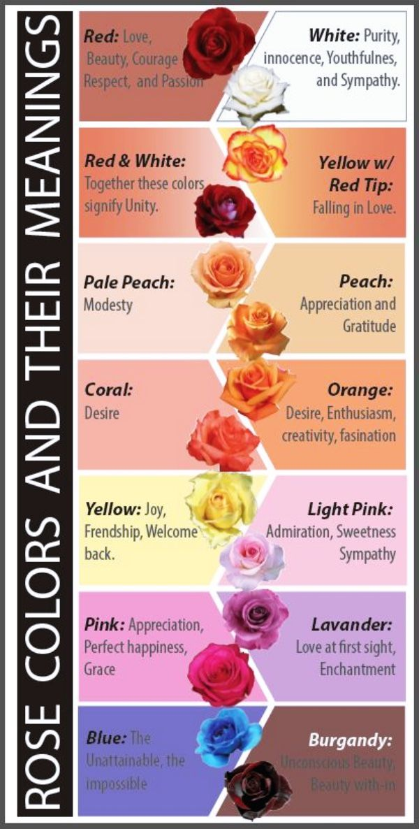 Rose Colors And Their Meanings Rose Color Meanings Amazing Flowers Color Meanings