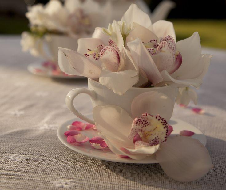 Orchidee in theekopjes