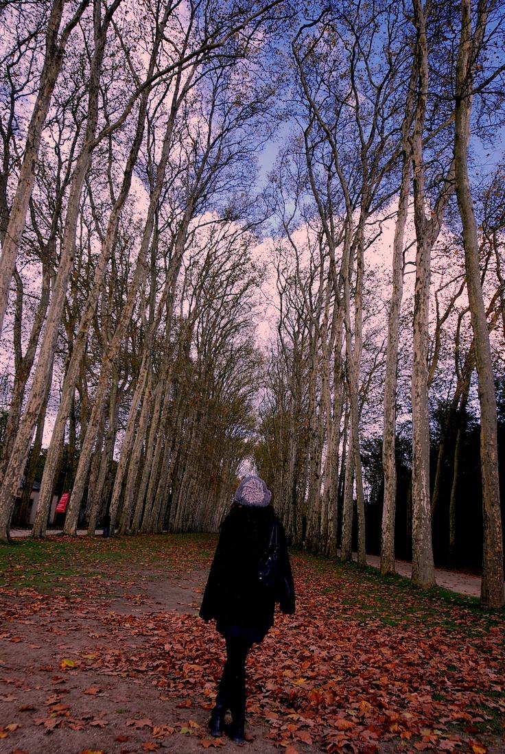 Fall Season in Versailles, Paris,