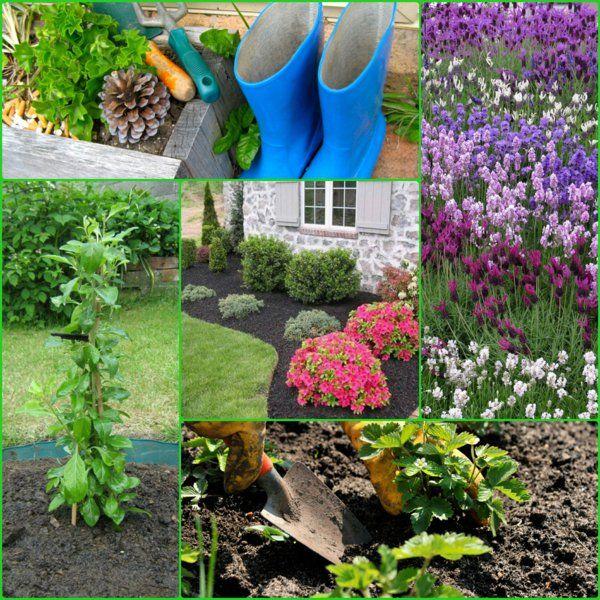 Einfassungspflanzen Gestaltungsideen